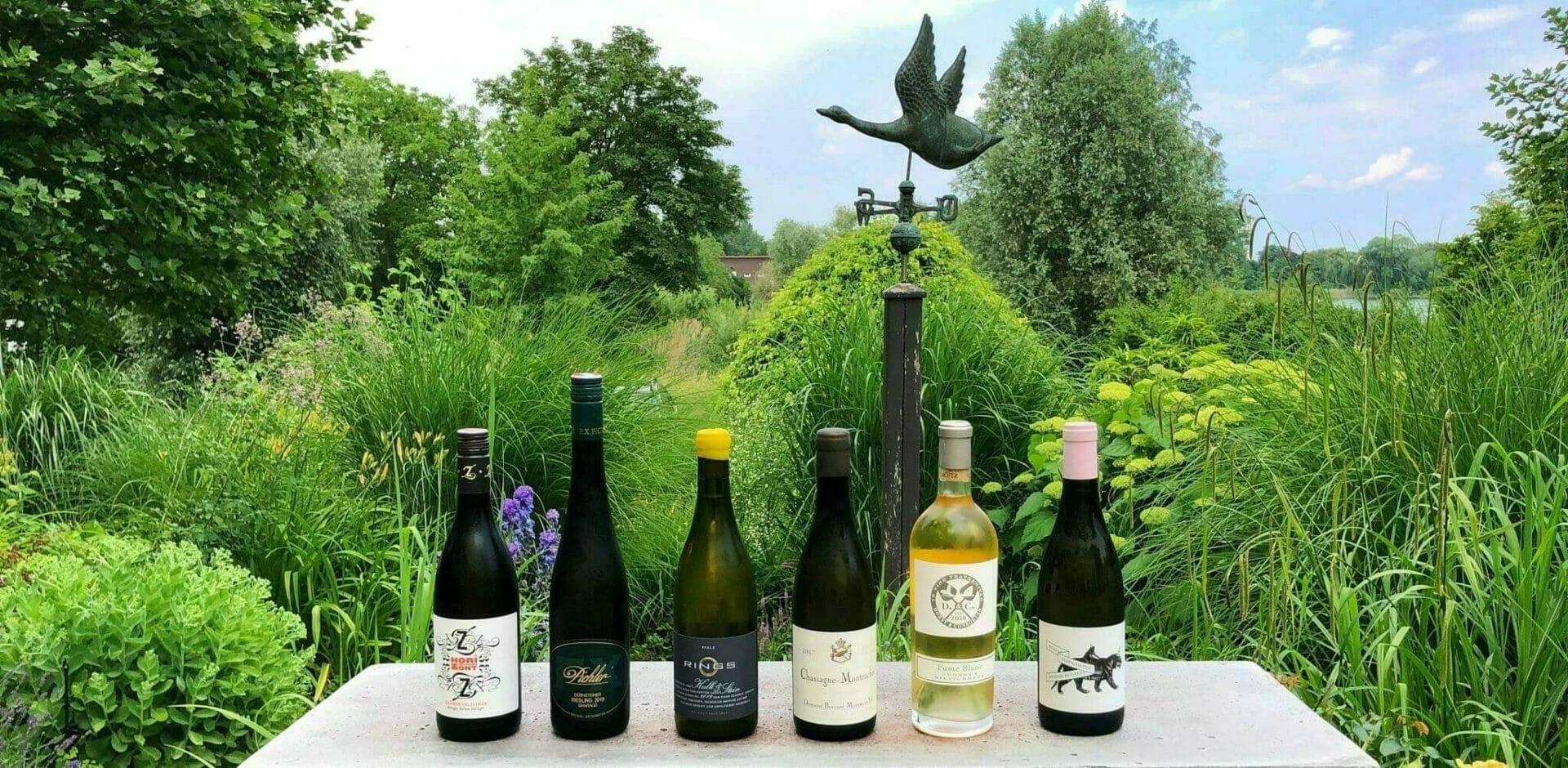 I nostri nuovi vini